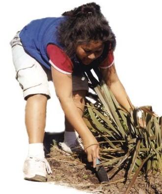 Δηλητηριώδη διακοσμητικά φυτά από τον