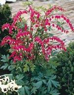 Φυτά ή και με ανθοφόρους θάμνους
