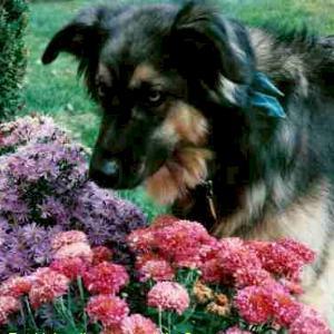 Mπορούμε να έχουμε κήπο και σκύλο;