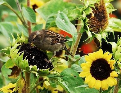 Στα πουλιά . (από τον μιχάλη πολίτη