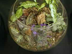 Τερράριο. ένας μικρός γυάλινος κήπος