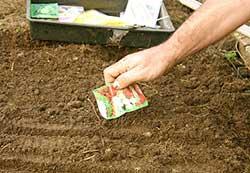 Αν έχετε έναν οικογενειακό λαχανόκηπο