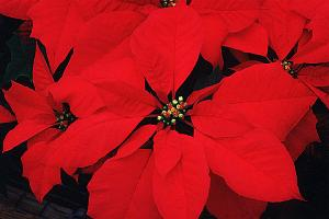 House Plants Gardenig Tips